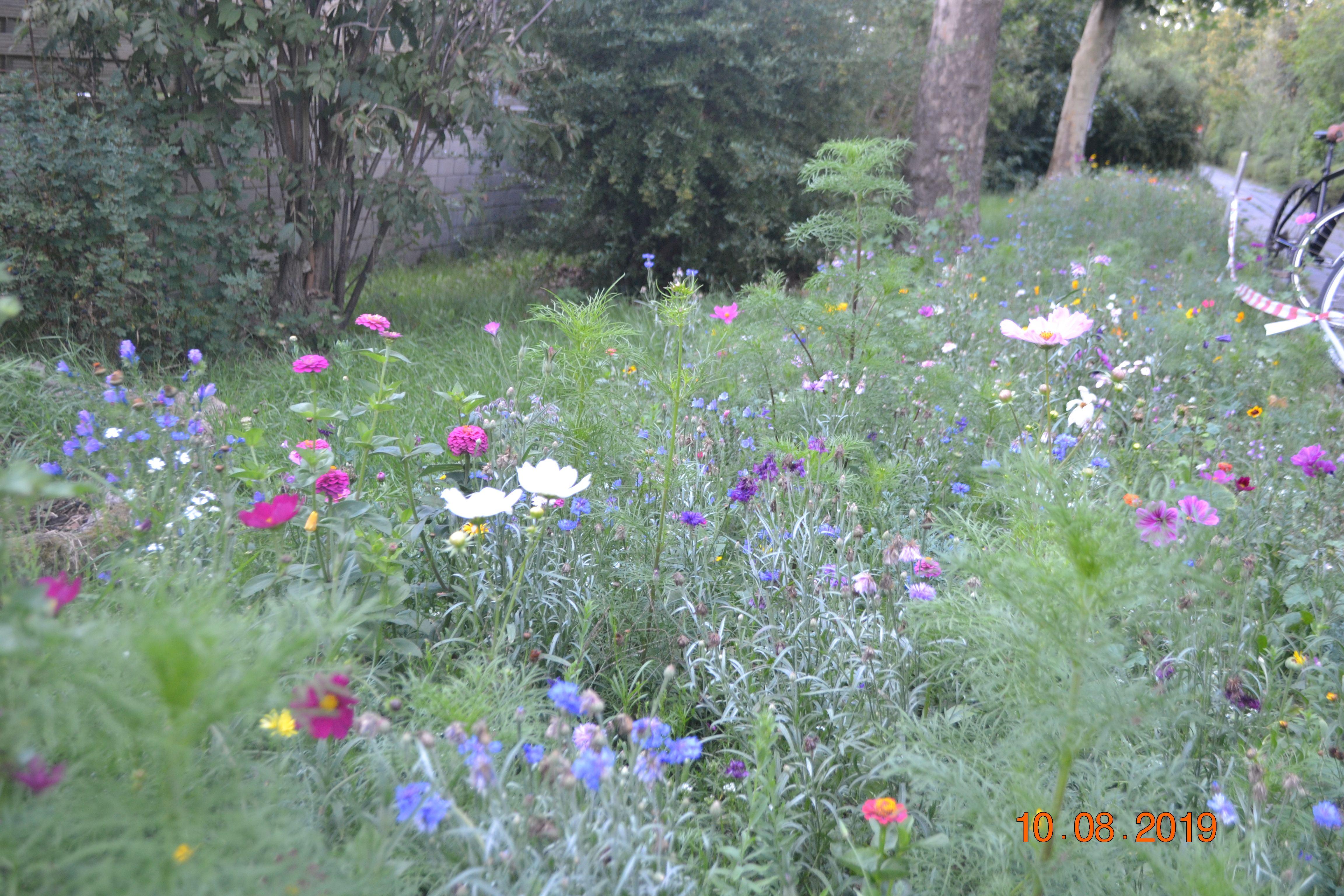 Blumenwiese Breodert.